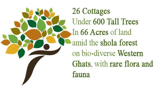 Tall Trees Munnar